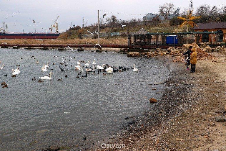 На переправе Одесса – Черноморск появились первые лебеди, фото-9