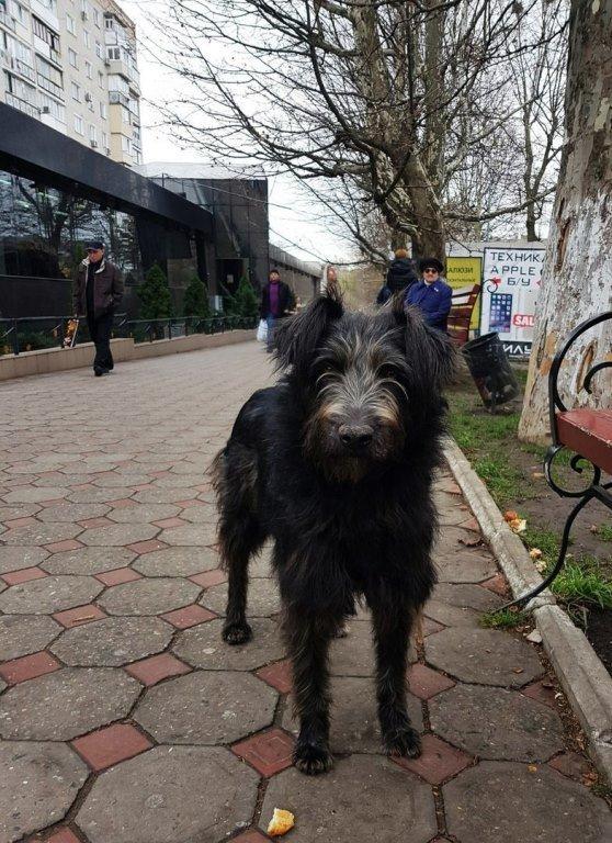 Травить запрещено, но разрешена эвтаназия: в Черноморске приняты новые Правила содержания домашних животных, фото-3