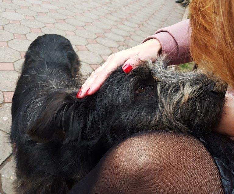 Травить запрещено, но разрешена эвтаназия: в Черноморске приняты новые Правила содержания домашних животных, фото-4