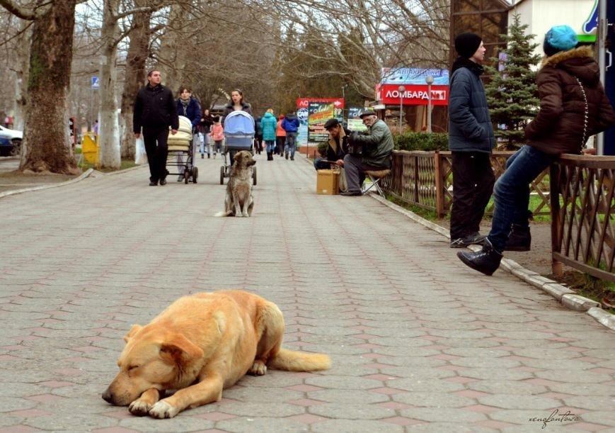 Травить запрещено, но разрешена эвтаназия: в Черноморске приняты новые Правила содержания домашних животных, фото-1