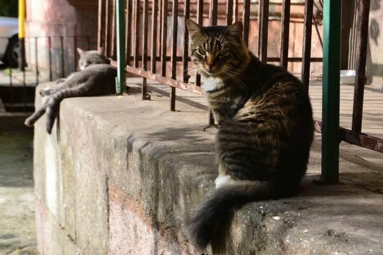 Травить запрещено, но разрешена эвтаназия: в Черноморске приняты новые Правила содержания домашних животных, фото-5