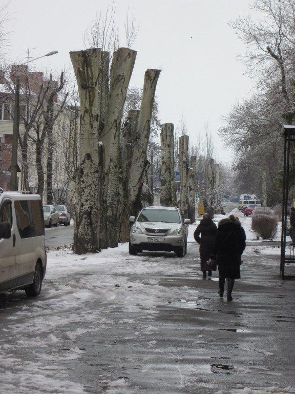 Жители Черноморска считают, что «короткая стрижка» деревьям не идет , фото-1