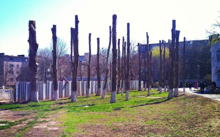 Жители Черноморска считают, что «короткая стрижка» деревьям не идет , фото-5