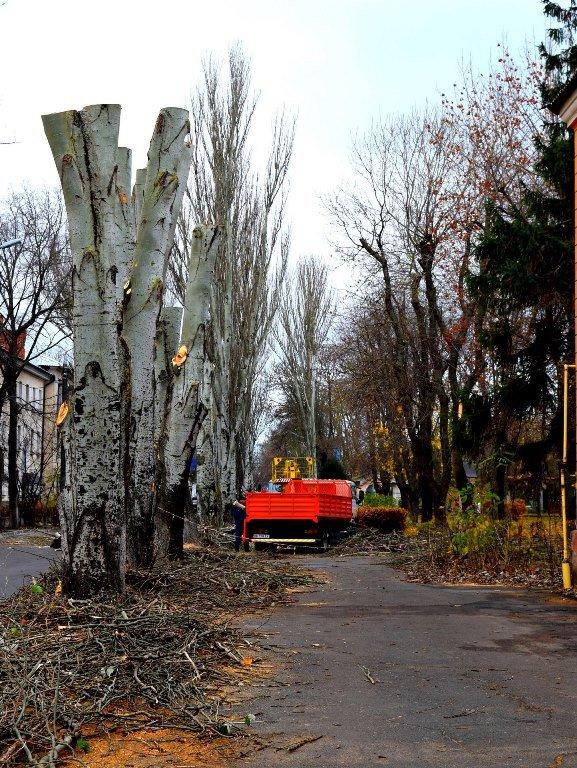 Жители Черноморска считают, что «короткая стрижка» деревьям не идет , фото-3