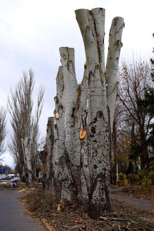 Жители Черноморска считают, что «короткая стрижка» деревьям не идет , фото-2