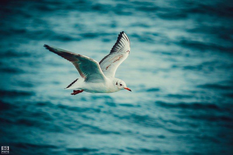 В Черноморске стартует экологический фотоконкурс                             , фото-2