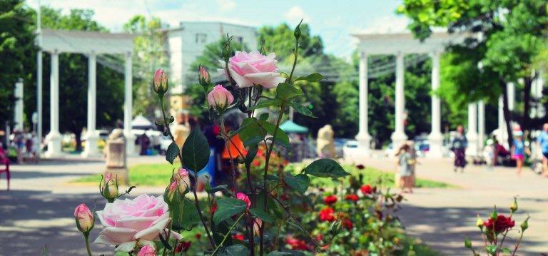 Названа дата, когда в Черноморске будет отмечаться День города, фото-3