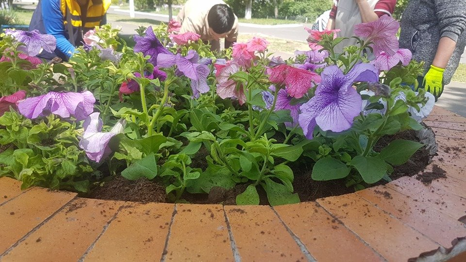 В Черноморске высаживают летние растения, фото-2