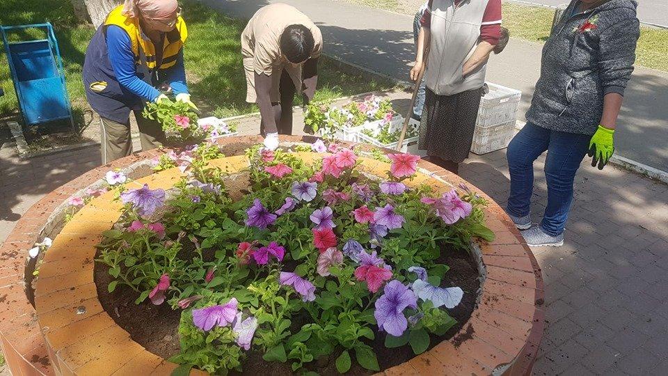 В Черноморске высаживают летние растения, фото-3