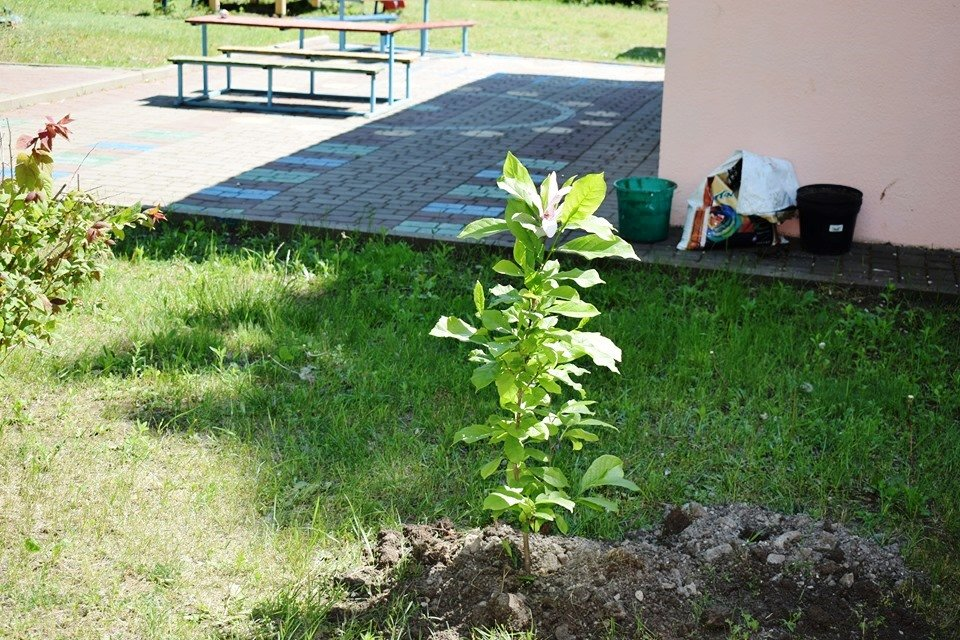 Выпускники подарили детсаду Черноморска деревья, фото-1