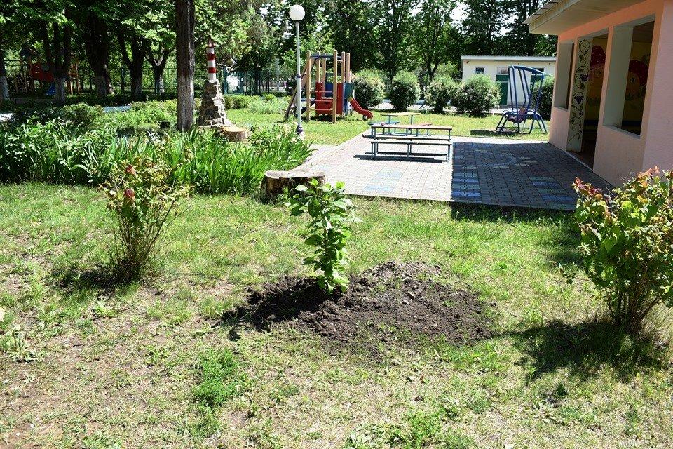 Выпускники подарили детсаду Черноморска деревья, фото-2