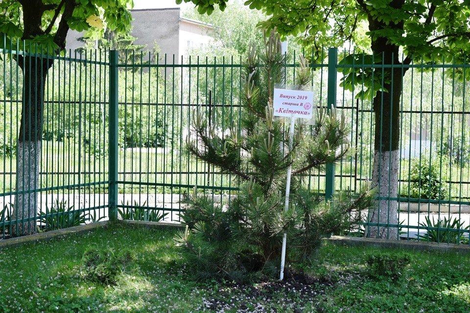 Выпускники подарили детсаду Черноморска деревья, фото-4