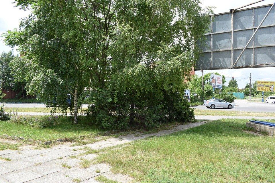 В Черноморске вблизи школы обнаружен рой пчел, фото-2
