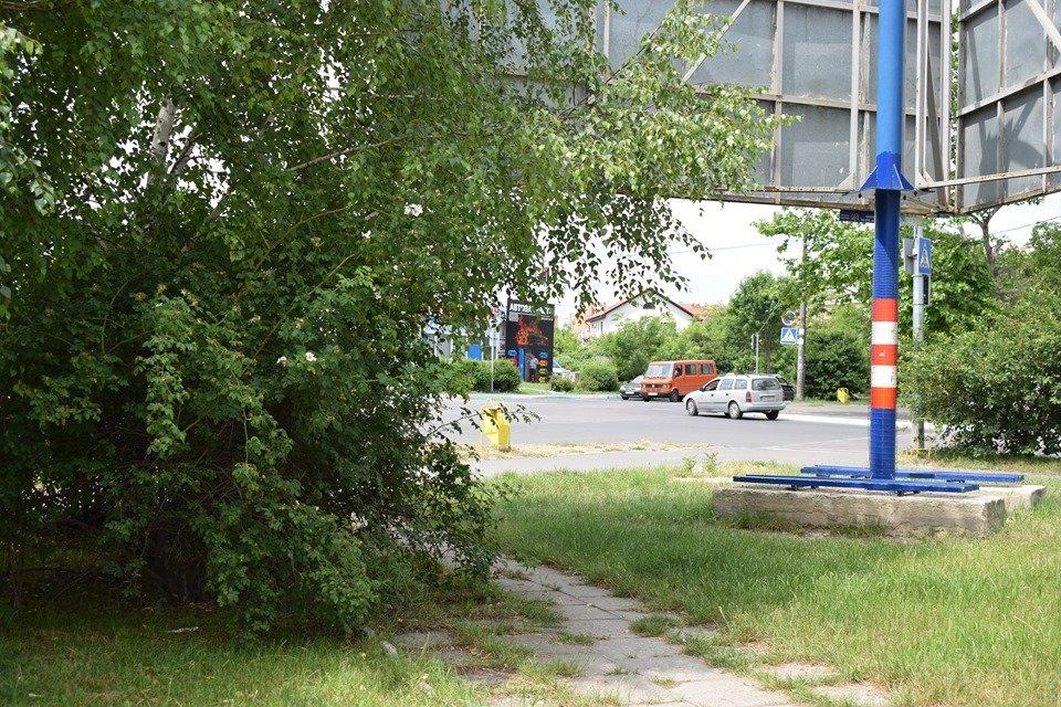 В Черноморске вблизи школы обнаружен рой пчел, фото-3