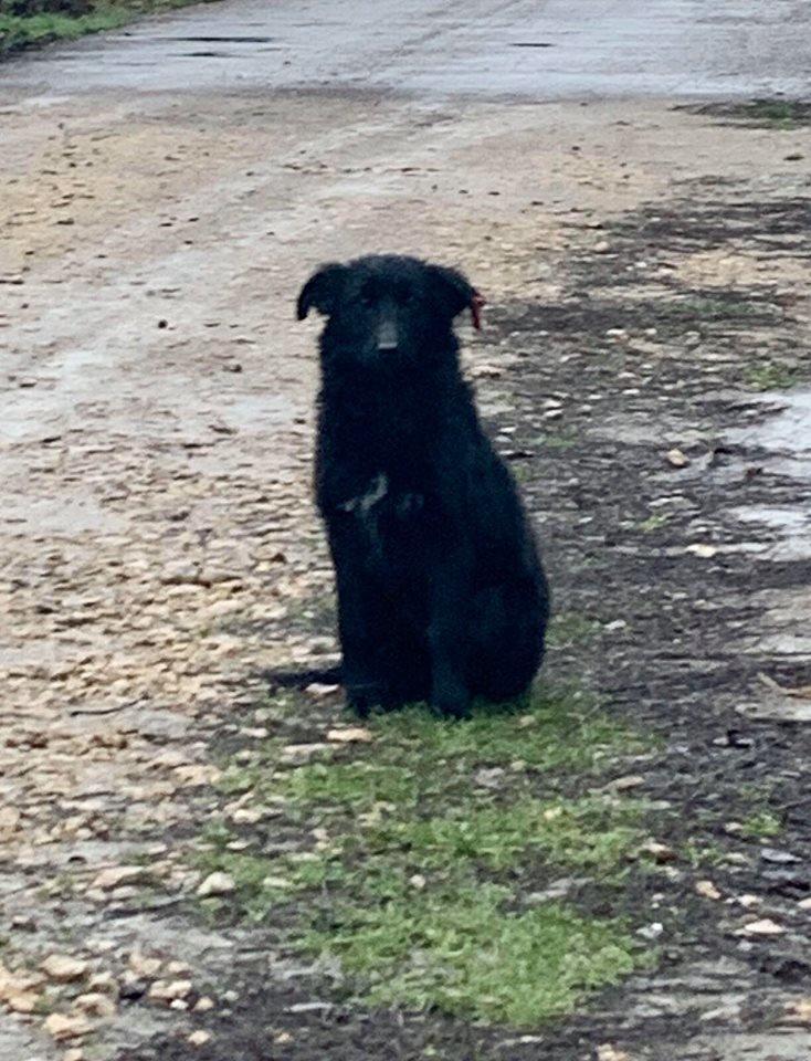 «Новый дом»: под Черноморском собака ищет любящих хозяев, фото-1