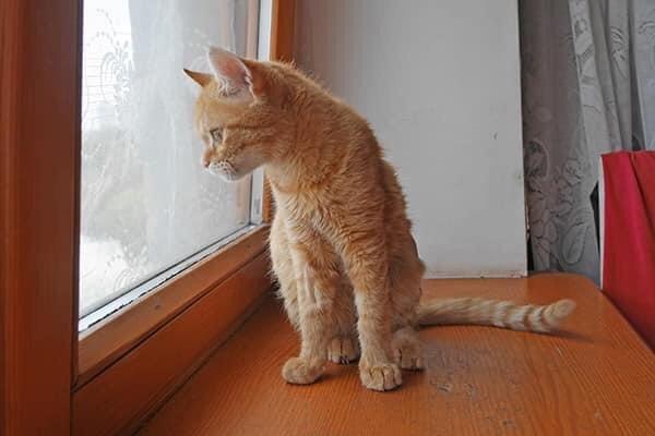 «Новый дом»: кот в Черноморске ищет любящих хозяев, фото-2