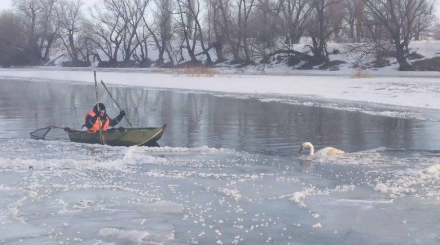 Спасатели Одессы освободили лебедя из ледяного плена, фото-1
