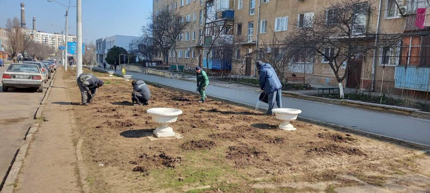 Более 800 кустов роз высадили сегодня в Черноморске , фото-1
