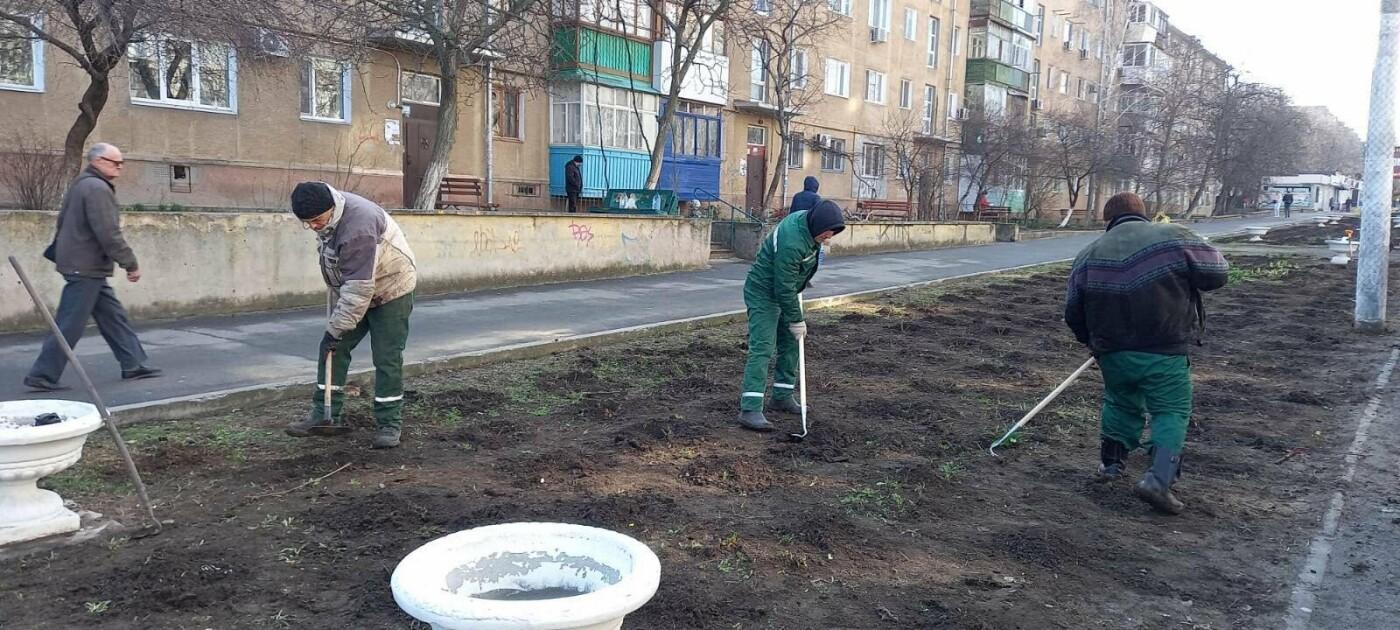 Более 800 кустов роз высадили сегодня в Черноморске , фото-2