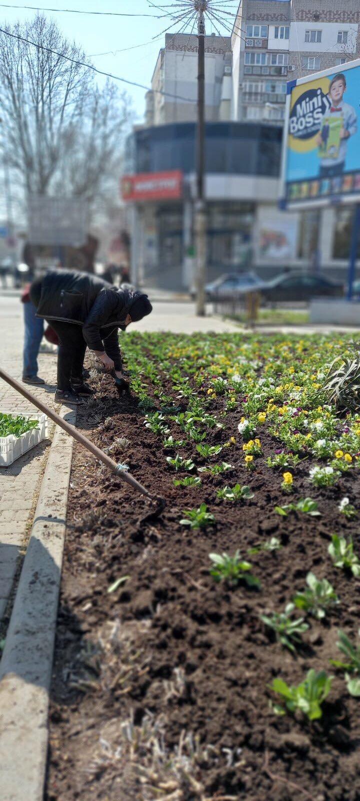 В Черноморске высаживают «весенники», фото-1