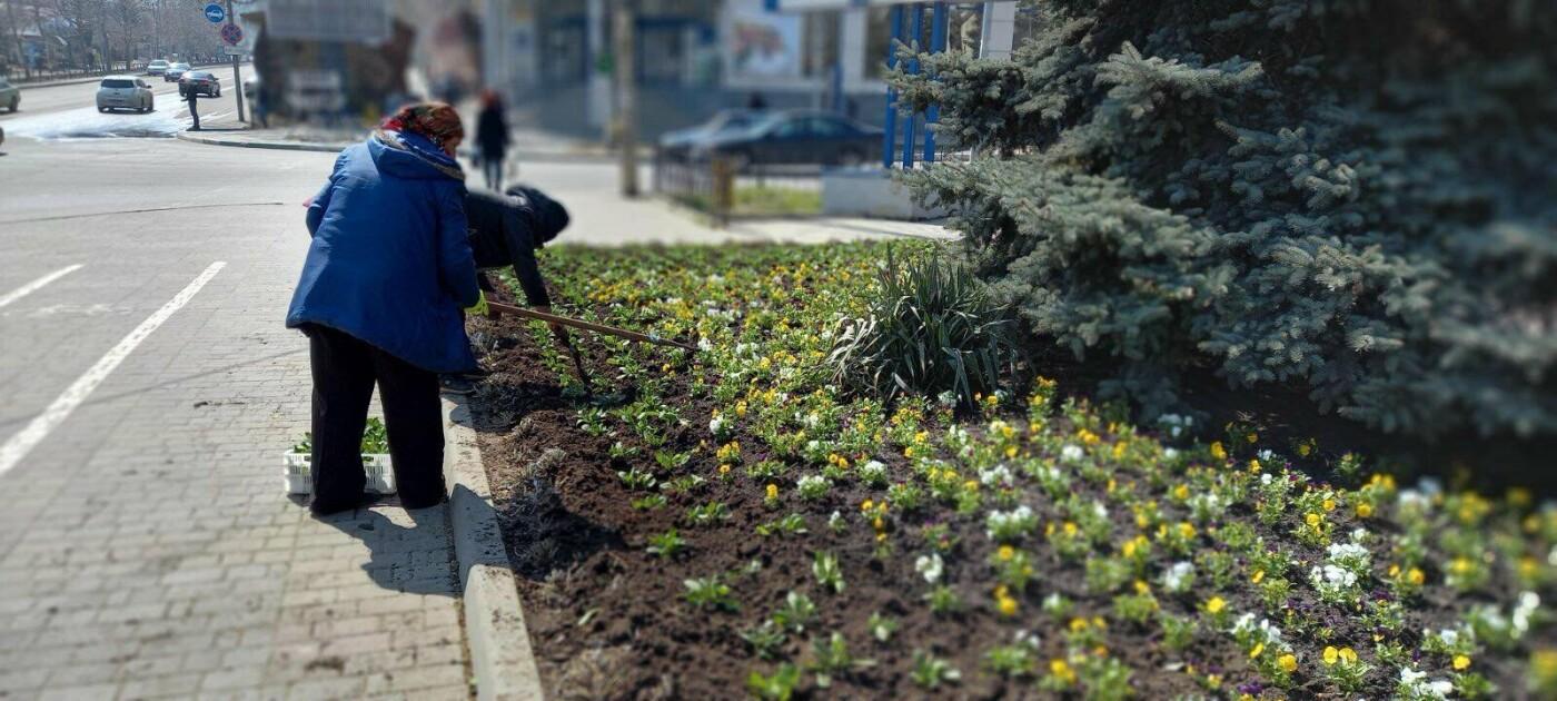 В Черноморске высаживают «весенники», фото-2