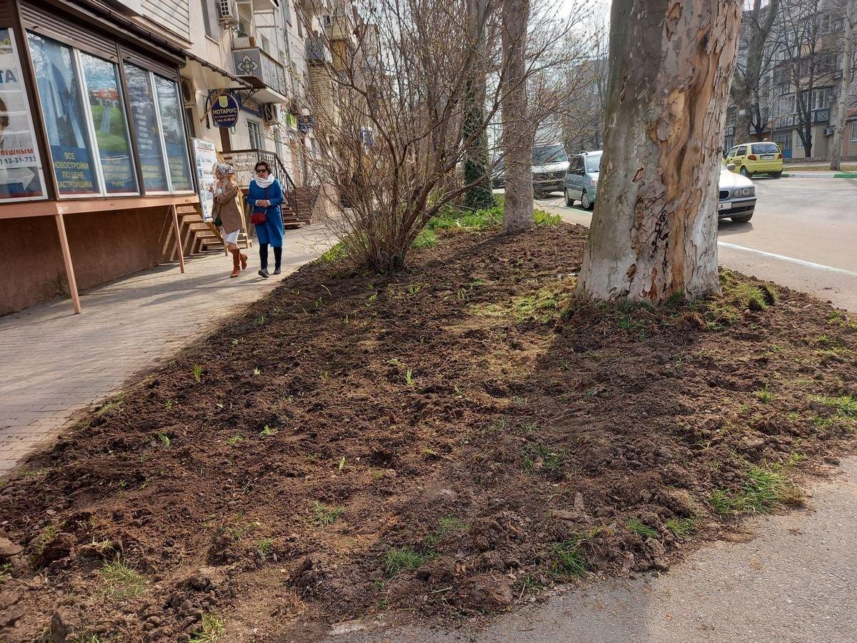 Экологи Черноморска высадили ирисы и форзиции, фото-3